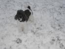 Unsere Harlis haben Spass im Schnee_1