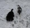 Unsere Harlis haben Spass im Schnee_2