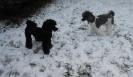 Unsere Harlis haben Spass im Schnee_5
