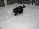 Winter 23.01.2013_4