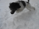 Siam hat Spass im Schnee_2