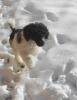 Siam hat Spass im Schnee_8