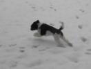 Unsere Pudel haben Spass im Schnee_1