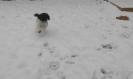 Unsere Pudel haben Spass im Schnee_2