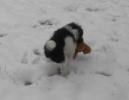 Unsere Pudel haben Spass im Schnee_3
