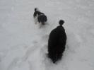 Unsere Pudel haben Spass im Schnee_5