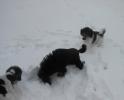 Unsere Pudel haben Spass im Schnee_8